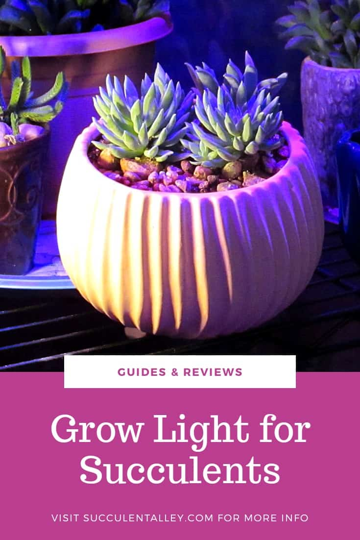 grow light for succulents