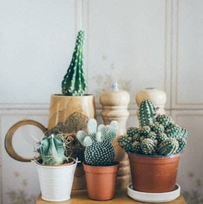 how often should you fertilize succulents