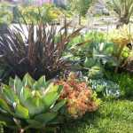 How to Plant Succulents in the Ground: Creative Succulent Garden Ideas 17