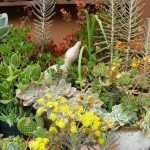 How to Plant Succulents in the Ground: Creative Succulent Garden Ideas 13