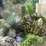 How to Plant Succulents in the Ground: Creative Succulent Garden Ideas 12