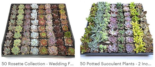 13 Best Places to Buy Succulents Online [2021 Buying Guide] 4