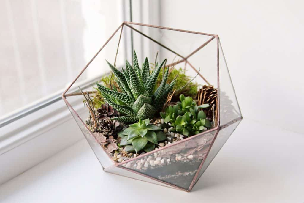 are succulents good for closed terrariums