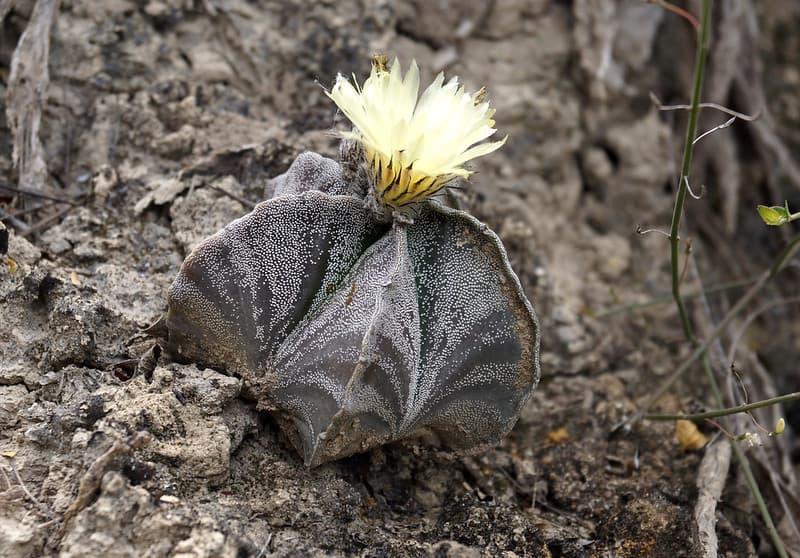 type of soil for cacti