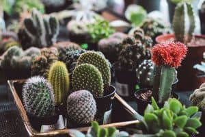 What Kind of Soil do Cacti Need?