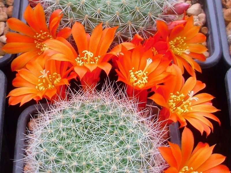 what type of soil do cactus need