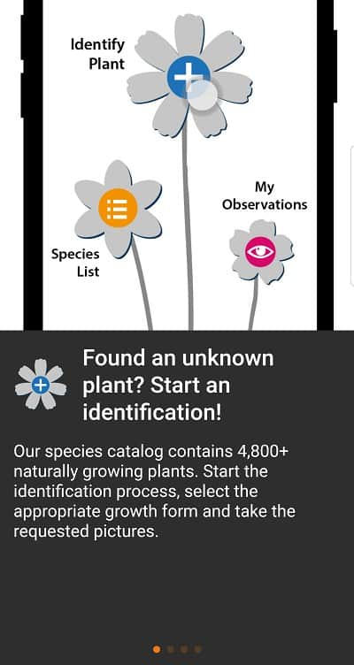 5 Best Plant Identification Apps [2021 Edition] 14