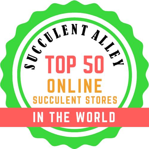 top 50 online succulent stores