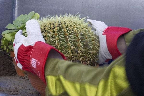 best gloves for handling cactus