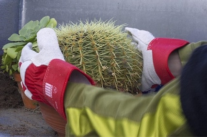best gloves for handling cactus