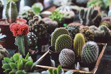 Top 3 Best Grow Lights for Cactus