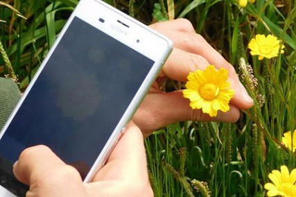 5 Best Plant Identification Apps [2020 Edition]