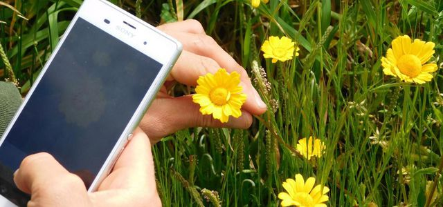 5 Best Plant Identification Apps [2020 Edition] 1