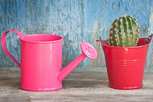 how often do you have to water a cactus