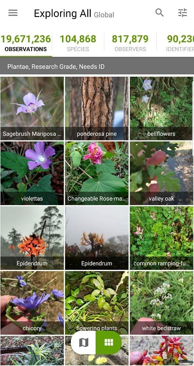 5 Best Plant Identification Apps [2021 Edition] 20