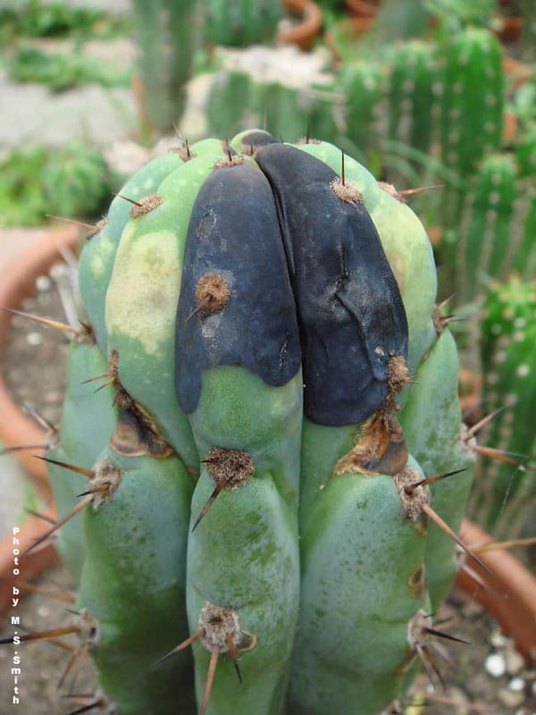 How to Get Rid of Cactus Bugs 2
