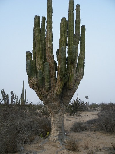 Understanding the Cactus Root Systems: 4 Types of Cactus Roots 4