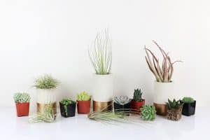 Air Plants and Succulents: A Perfect Match