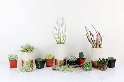 air plants and succulents