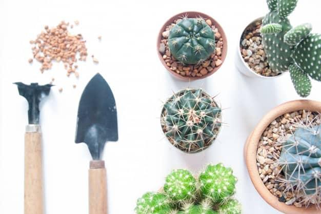 best soil for cactus in pots