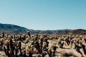 6 Cactus Adaptations in the Desert