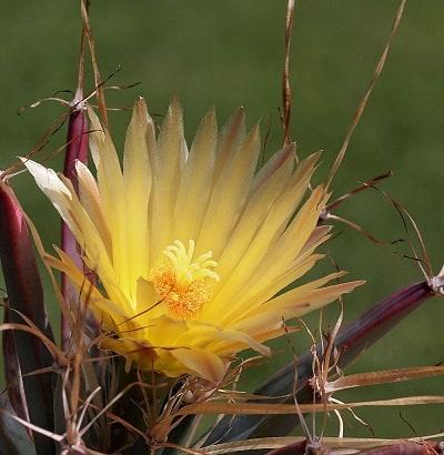 cactus plants flowers