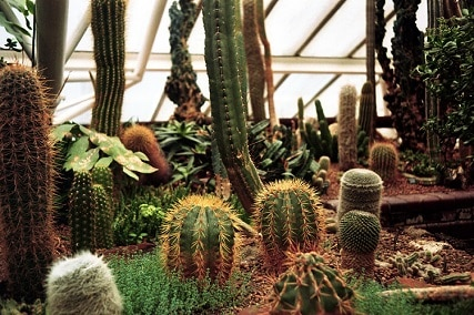 7 Cool Facts about Cactus You Didn't Know About!