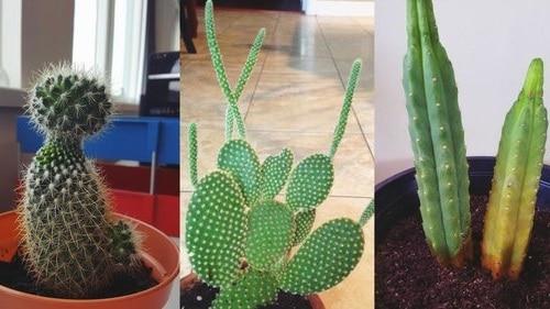 do cactus need sun