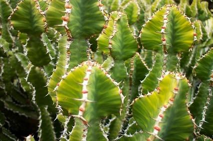 Do Cactus Need Sun?