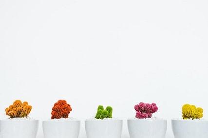 does mini cacti clean the air