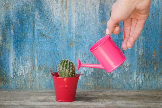 How to Take Care of a Cactus Indoors 2