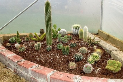 How to Plant Cactus in Ground: A Step-by-Step Guide