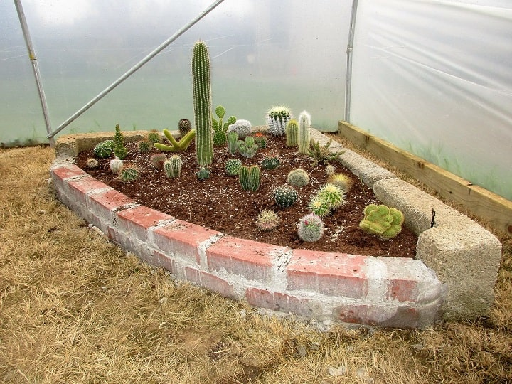 how to plant cactus in ground