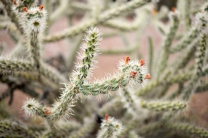 how to remove cactus needles embedded in skin