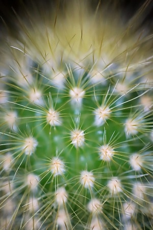 how to remove cactus needles from fingers