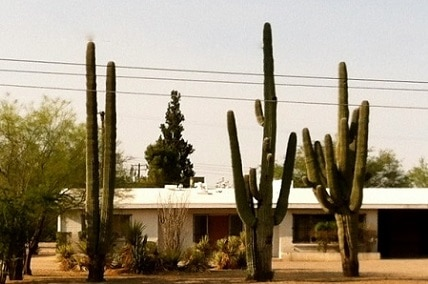 How to Transplant a Large Cactus