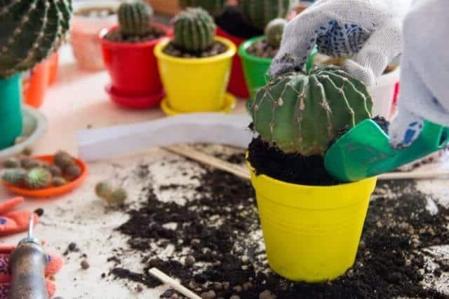How do Cacti Reproduce? 4