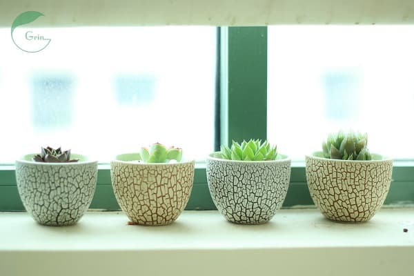 How to Keep Succulents Small 5
