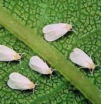 Succulent Pests: What Eats Succulent Leaves? 4