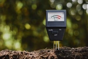What is the Best Plant Moisture Meter?
