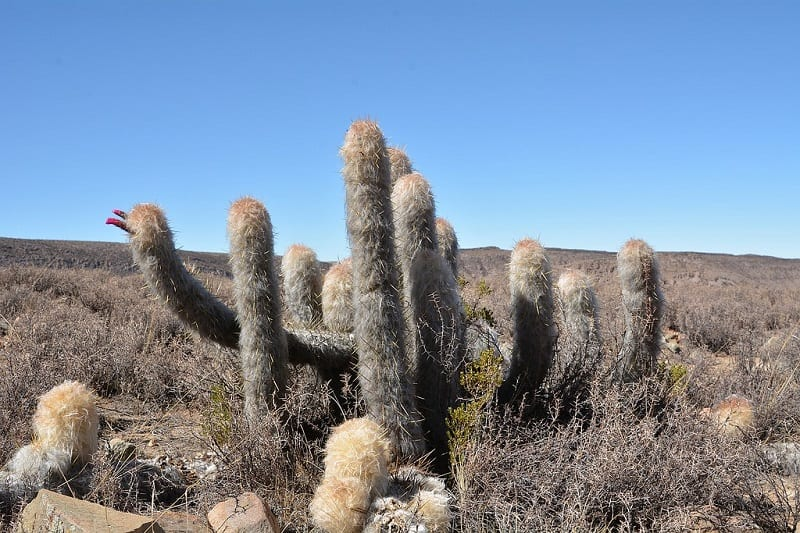 cactus that will survive winter