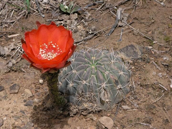 Where do Cactuses Grow? 3