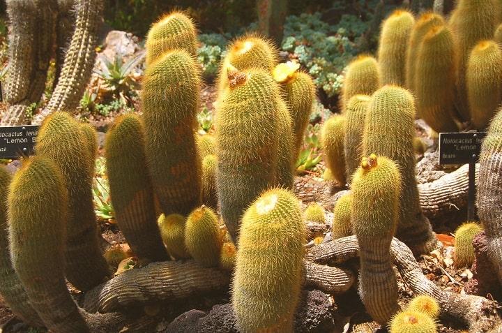 Where do Cactuses Grow? 4