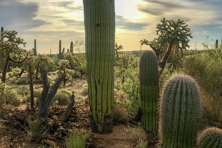 Fertilizer for Cactus: When, How and With What 1
