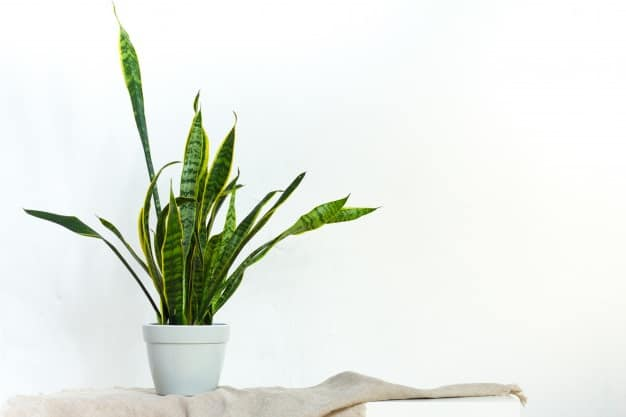 best pots for snake plants