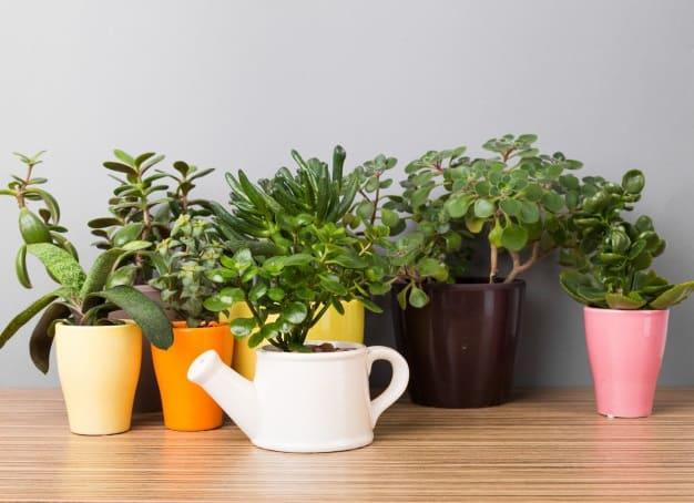 best way to water succulents