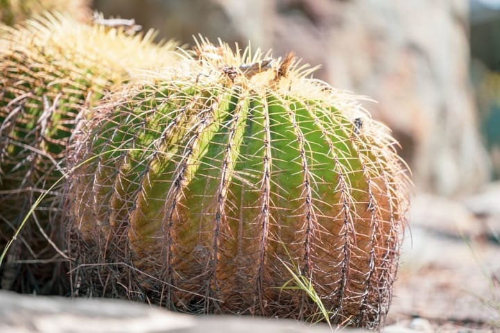 best cactus fertilizer ratio