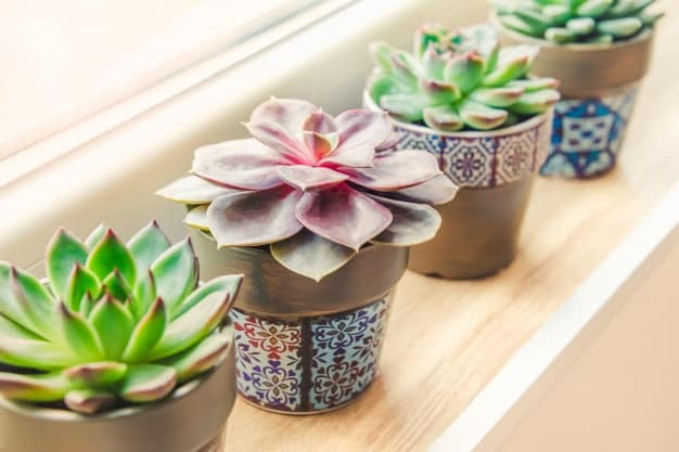 how to take care of a succulent indoors