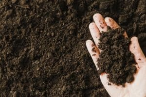 How to Test and Store Succulent Soil