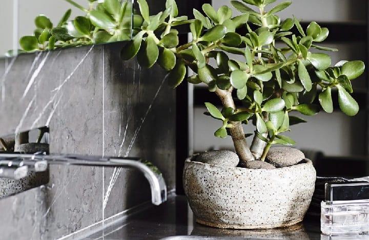 best pot for jade plants